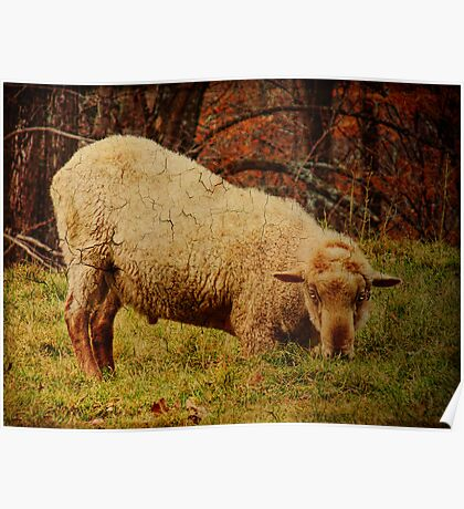 Sheep With An Attitude Poster