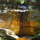Old Mans Cave - Hocking Hills Ohio by Tony Wilder
