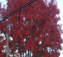 Surreal Red Tree by PockySamurai