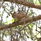 Squirrel! by Kathi Arnell