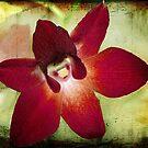 Orchid 2 by Ellen Cotton