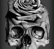 Skull Rose by Jessica Bone