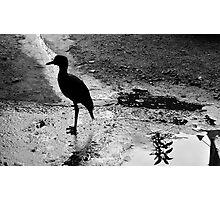 El Magdalena (Ave/Bird) BW Photographic Print