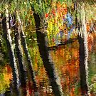 Reflections of Fall by Amanda White