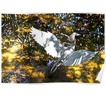 Wingspan of a White Egret Poster