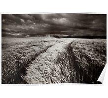 """Barley Crop"" Poster"