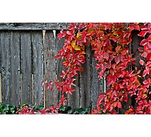 On the Fence Photographic Print