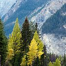 Autumn in the Mountain by Robin Webster