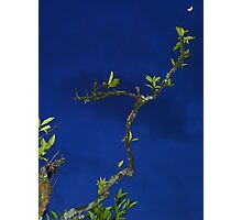 Branch and moon Photographic Print