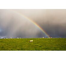 Rainbow ~ Sheep Photographic Print