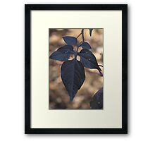 Solarum Dulcamara  in Autumn Framed Print