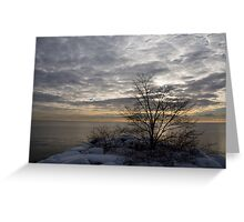 Early Morning Tree Silhouette on Silver Sky Greeting Card