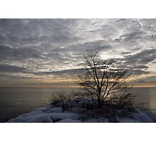Early Morning Tree Silhouette on Silver Sky Photographic Print