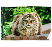 Fluffy Kitty 2 Poster