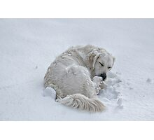 All Curled Up Photographic Print