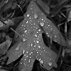 Dew Drops by Adam Kuehl