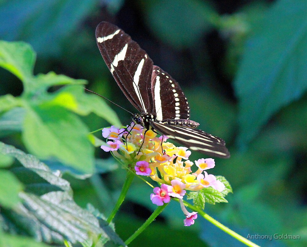 A pretty butterfly by jozi1