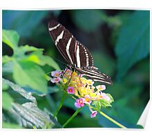A pretty butterfly Poster