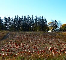 Pumpkin patch by MarianBendeth