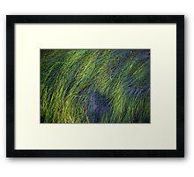 Sea Grass at Sunrise Framed Print