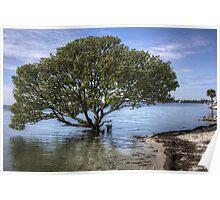 Mangrove Tree Poster