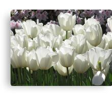 White Tulips, Simply Elegant Canvas Print