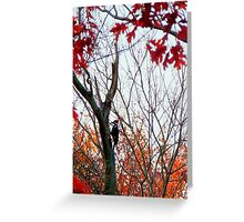 Pileated Woodpecker in Autumn  Greeting Card