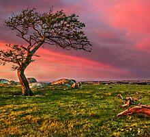 october-tree by ketut suwitra