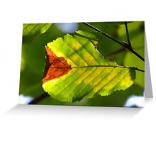 Colorful fall leaf Greeting Card