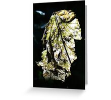 Cool luminent fall leaf Greeting Card