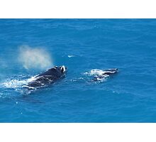 Whales at The Bight Photographic Print