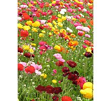 Happy Patch - Floral Rainbow  Photographic Print