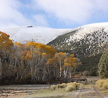 Antone Canyon in October by Roz Fayette