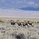 Does and Fawns in Steptoe Valley, NV by Roz Fayette