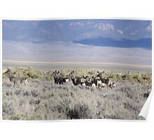 Does and Fawns in Steptoe Valley, NV Poster