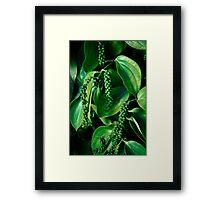 Peppercorn Plants - Far North Queensland Framed Print