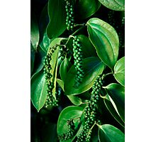 Peppercorn Plants - Far North Queensland Photographic Print