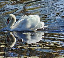 Swan on a Clear Day by PineSinger