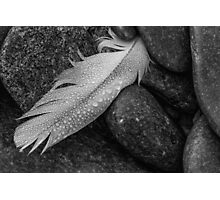 Dew Stone Feather Photographic Print
