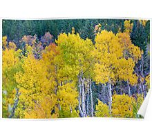 Colorful Forest Poster