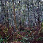 Woodland Maze 1 by John Dunbar