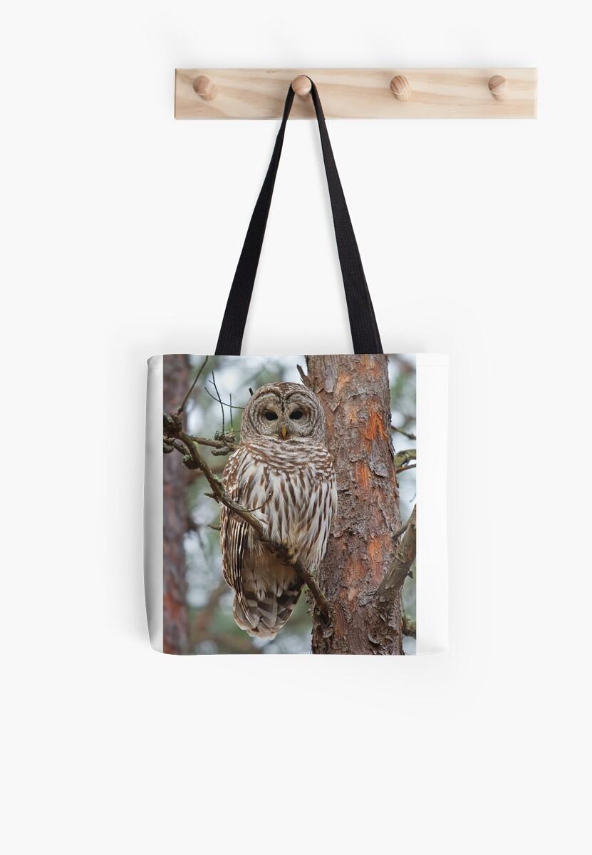 Barred Owl  by Jim Cumming
