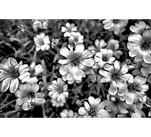 Floral Drama Photographic Print