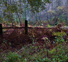 Woodland Maze 2 by John Dunbar