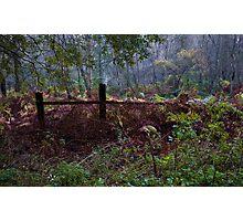 Woodland Maze 2 Photographic Print