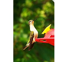 Female Ruby Throated Hummingbird Photographic Print