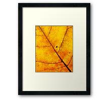 Surface of the Sun Framed Print