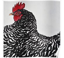 Barred Rocks Chick Poster