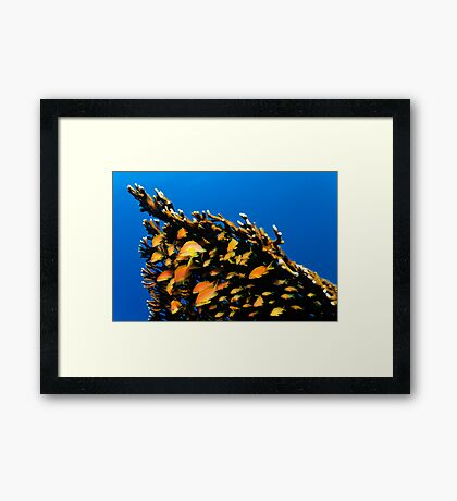 Protected Framed Print