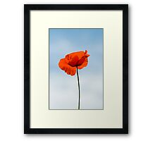 One Poppy Framed Print